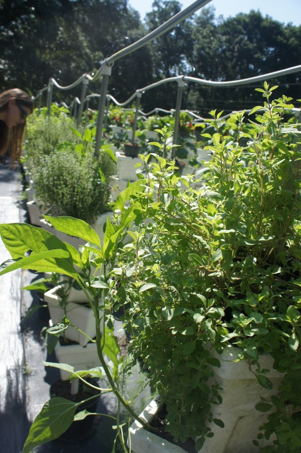 The garden at Lake Meadow Naturals