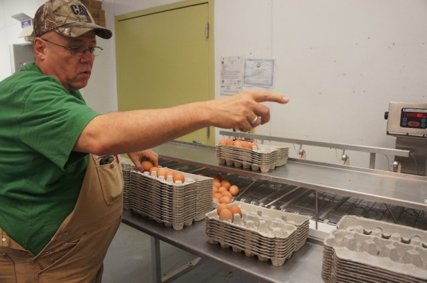 Dale points to the machine sorting the eggs out by weight