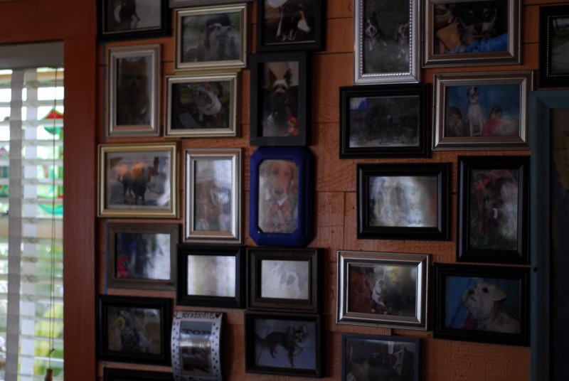 Various dog pictures in the chihuahua bar