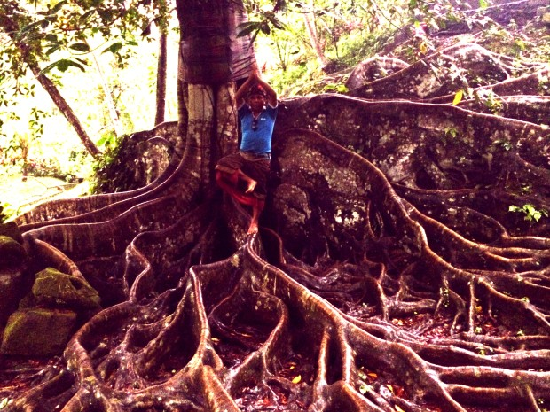 Yogi man and tour guide balancing on an ancient bodhi tree root with yoga